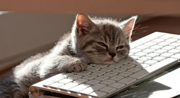 boring-pc-cat